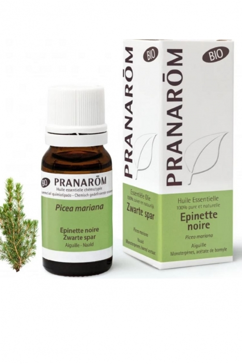 Ель черная БИО 10мл Ботаническое название: Picea mariana